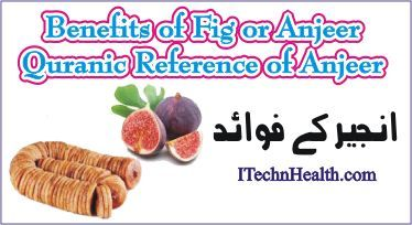 Benefits of Fig or Anjeer In Urdu