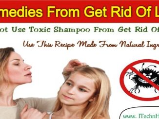 Best Home Remedy From Get Rid Of Lice