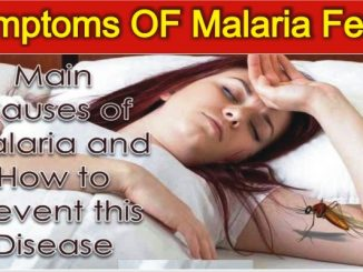 Symptoms Of Malaria and How to Prevent this Disease