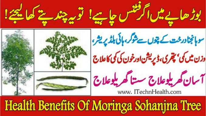 Health Benefits of Moringa Or Drumstick Tree