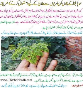 Sohanjna Tea Benefits