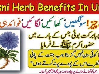 Kasni Herb Benefits In Urdu, Arq e Kasni Benefits For Health